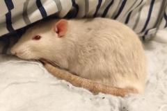 Derek relaxing in the bedding