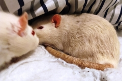 Ronnie and Derek in the bedding