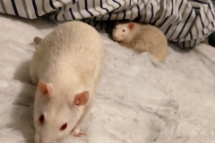 Ronnie (foreground) and Derek in the bedding