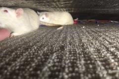 Ronnie and Derek under the sofa