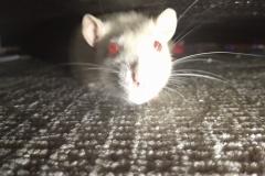 Ronnie under the sofa