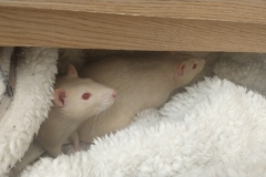 Ronnie and Derek in the drawer