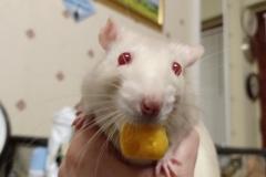 Derek with a foody find
