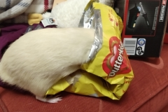 Ronnie with his head in a bag of food