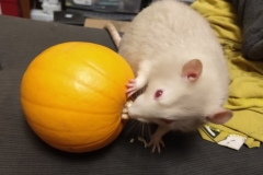 Derek and the pumpkin
