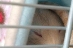 Sleepy in the tube