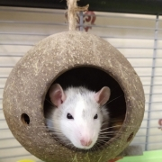 Alec hanging around in the coconut shell, Apr 2021