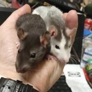 Jack and Alec, Apr 2021