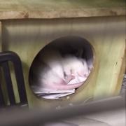 Alec sleeping, Apr 2021