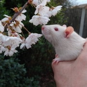 Derek sniffing tree blossom for the first time, Mar 2019