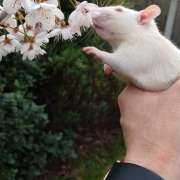 Ronnie sniffing tree blossom for the first time, Mar 2019