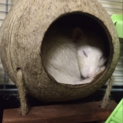 Ronnie sleeping in the shell, Mar 2019