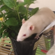 Derek exploring the mint plant, Apr 2019