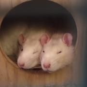 Ronnie and Derek asleep, Apr 2019