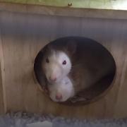 Ronnie alert; Derek sleepy, Apr 2019