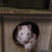 Ronnie poking his head out on top of Derek, May 2019