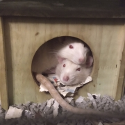Ronnie and Derek curled up in their house, Apr 2020
