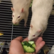 Tucking in to the home-grown cucumber, May 2020