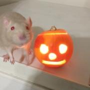 Derek and the pumpkin, Oct 2020
